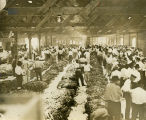 Tobacco market in large warehouse or barn, Baxley, Georgia, 1920s?