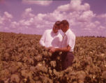 Secretary of Agriculture Orville Freeman inspects crops on a farm, 1961