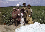 African American children picking cotton on a farm, circa 1940s