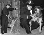 Atlanta police department's new canine unit patroling the streets, 1959