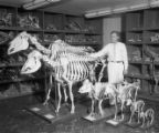 Veterinary anatomy models on UGA's campus, 1961