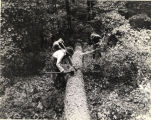 Three men trimming felled pine tree in forest, Georgia, 1940s?