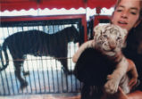 Akbar, three-week-old white Bengal tiger, born in Mobile, Alabama, from the Clyde Beatty-Cole...