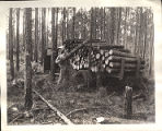 Lumber worker piling pine logs onto truck in pine forest, Georgia, 1959?