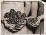 Women's hands holding pine cones and pine seeds (pine nuts), Georgia, 1939.