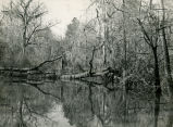 Fallen tree, covered with Spanish moss, in the water, Ocmulgee swamps, Georgia, April 1946.
