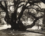 Helen Phillips and Mary Woods, standing in the Lovers Oak, Prince Street, Brunswick, Georgia,...