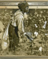 Young African American boy picks cotton, Georgia, 1930s?