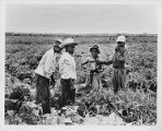 Child agricultural workers in the fields