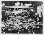Agricultural workers sort vegetables