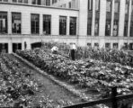 Journal of Labor; [Victory garden next to Atlanta City Hall]