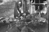 Woman feeding a rafter or gang of turkeys, Georgia, 1930s.