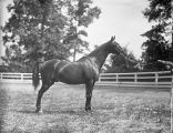 Horse in a barnyard, Georgia, 1926.