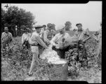 Cotton Picking, 1935