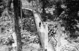 Footbridge, Silver Springs, Florida, 1938.