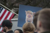 Donald Trump pig sign, Women's March on Washington, 2017-01-21