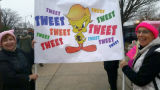 Donald Trump Tweety Bird sign, Women's March on Washington, 2017-01-21